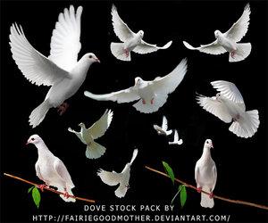 paloma colomba della pace
